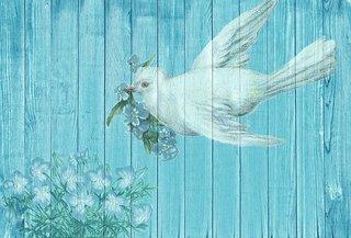 dove-1861791__340.jpg