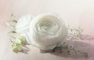 flower-1354703_1280.jpg