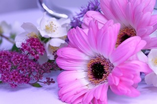 flower-2459523_640.jpg