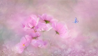 flower-3054734_1280.jpg