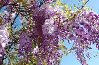 flower-3342728_1920.jpg
