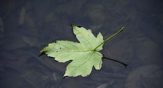 leaf-1833394_640.jpg