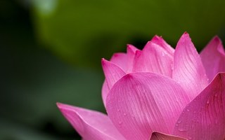 lotus-614494__340.jpg