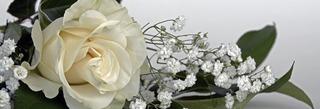 roses-1420724_1280.jpg