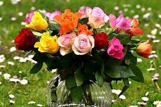 roses-2230459__340.jpg