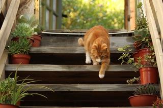 cat-1846356_1280.jpg
