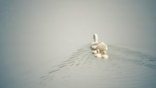 duck-1536482_640.jpg
