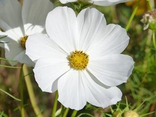 flower-1678770_640.jpg