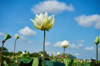 flower-2306514__340.jpg