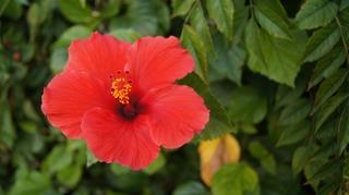 flower-2356773_960_720.jpg