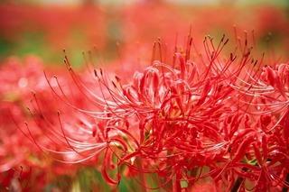 flowers-2336745_640.jpg