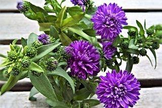 flowers-4523052__340.jpg