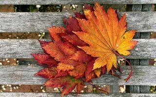 foliage-1817471_960_720.jpg
