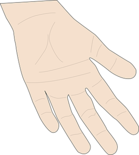 hand-146478__340.png