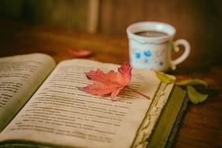 leaves-1076307__340.jpg