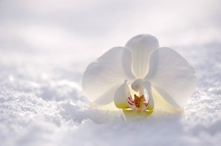 orchid-2952074_640.jpg
