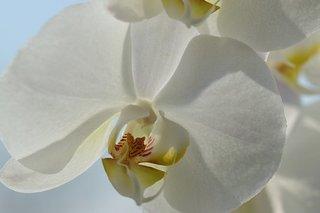 orchid-4155815__340.jpg