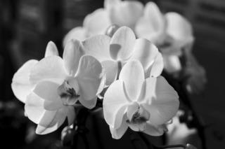 orchid-600300_960_720.jpg