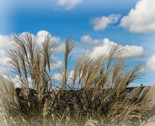 ornamental-grass-188422_640.jpg