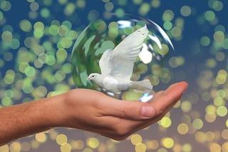 peace-dove-2489589_640.jpg