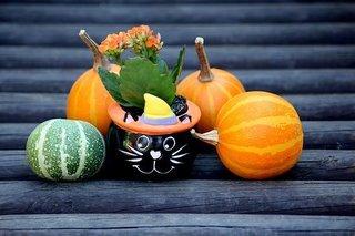 pumpkins-3754807__340.jpg