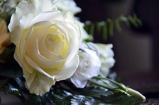 roses-4059127__340.jpg