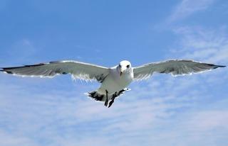 seagull-1684041_640.jpg