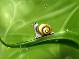 snail-83672__340.jpg