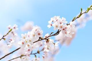 spring-2218771_1280.jpg