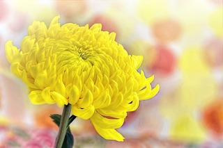 yellow-3190762_1280.jpg